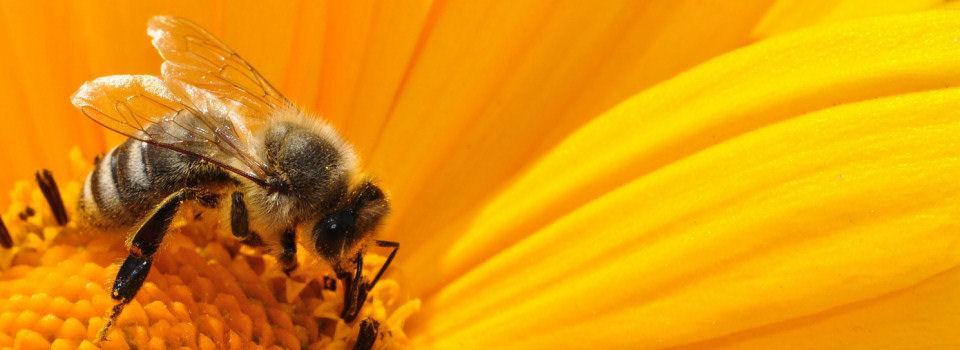 Pogórski Związek Pszczelarzy w Tarnowie